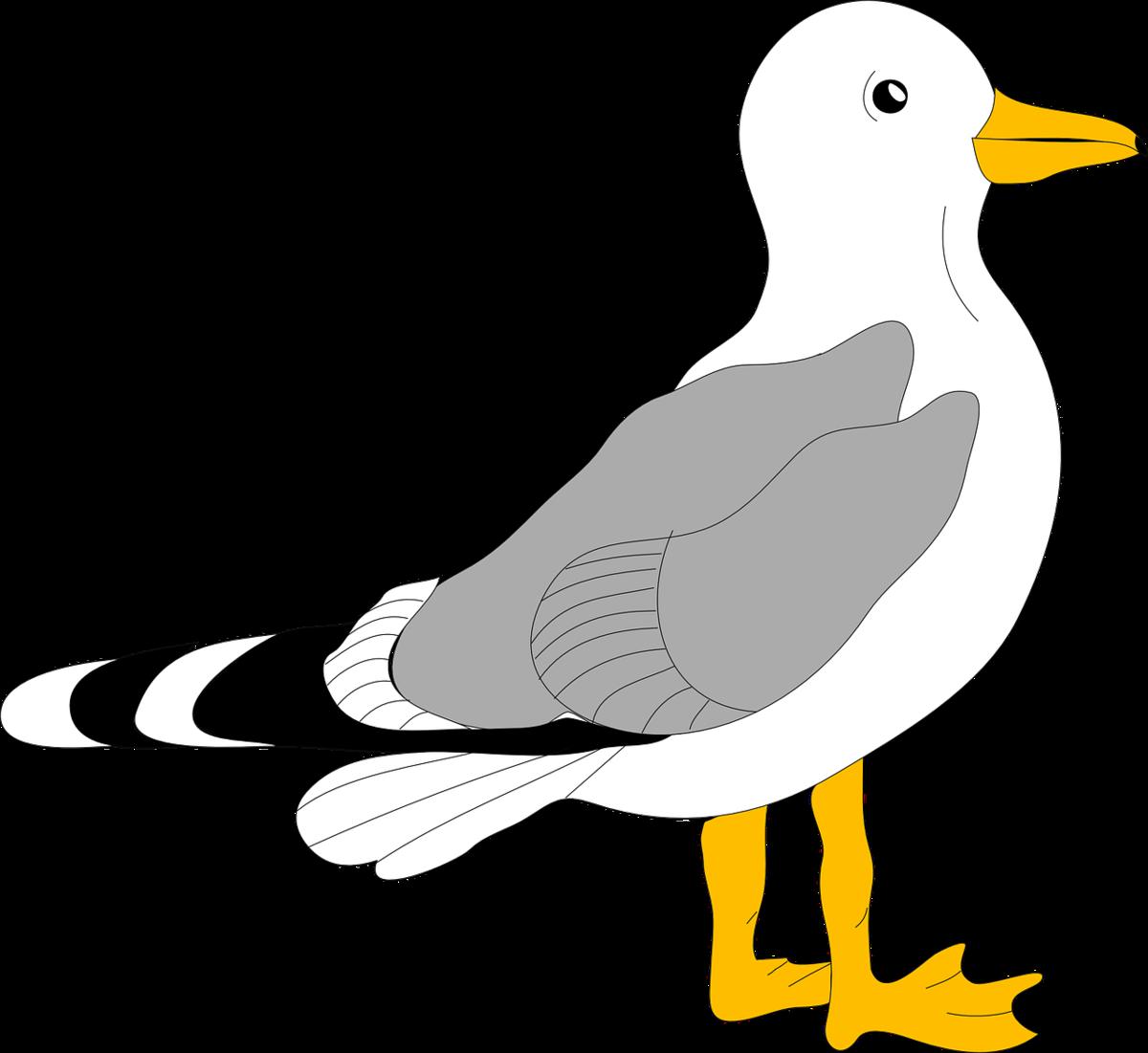 Картинки детям чайка