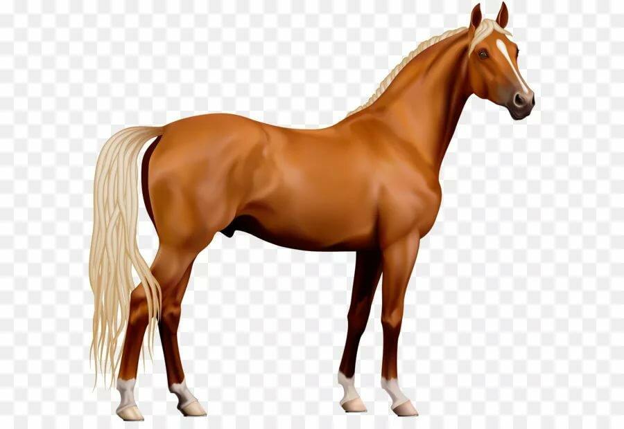 лошадь рисунок без фона автомобили для продажи