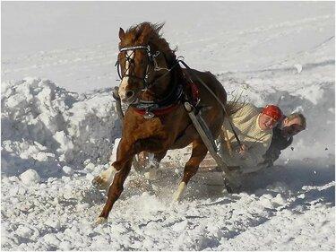 зимние скачки на лошадях с санями