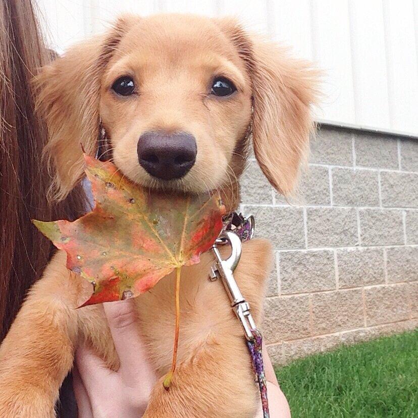 уже через мимимишные фото собак подготовку