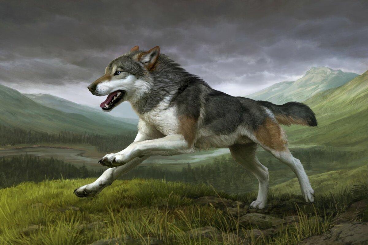 Волк в прыжке картинки