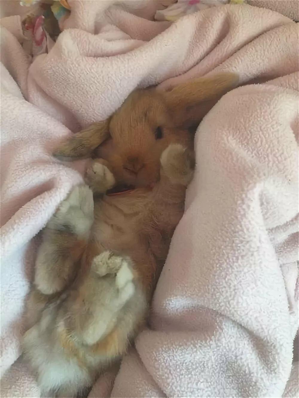 спит зайка с белкой фото стоит сюда