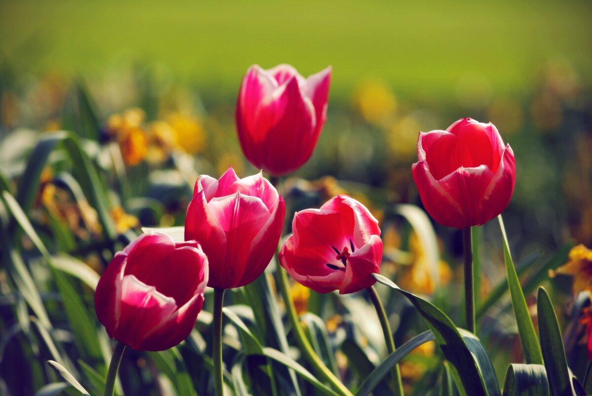 охотники привидениями фото на рабочий стол цветы тюльпаны туи выгодно