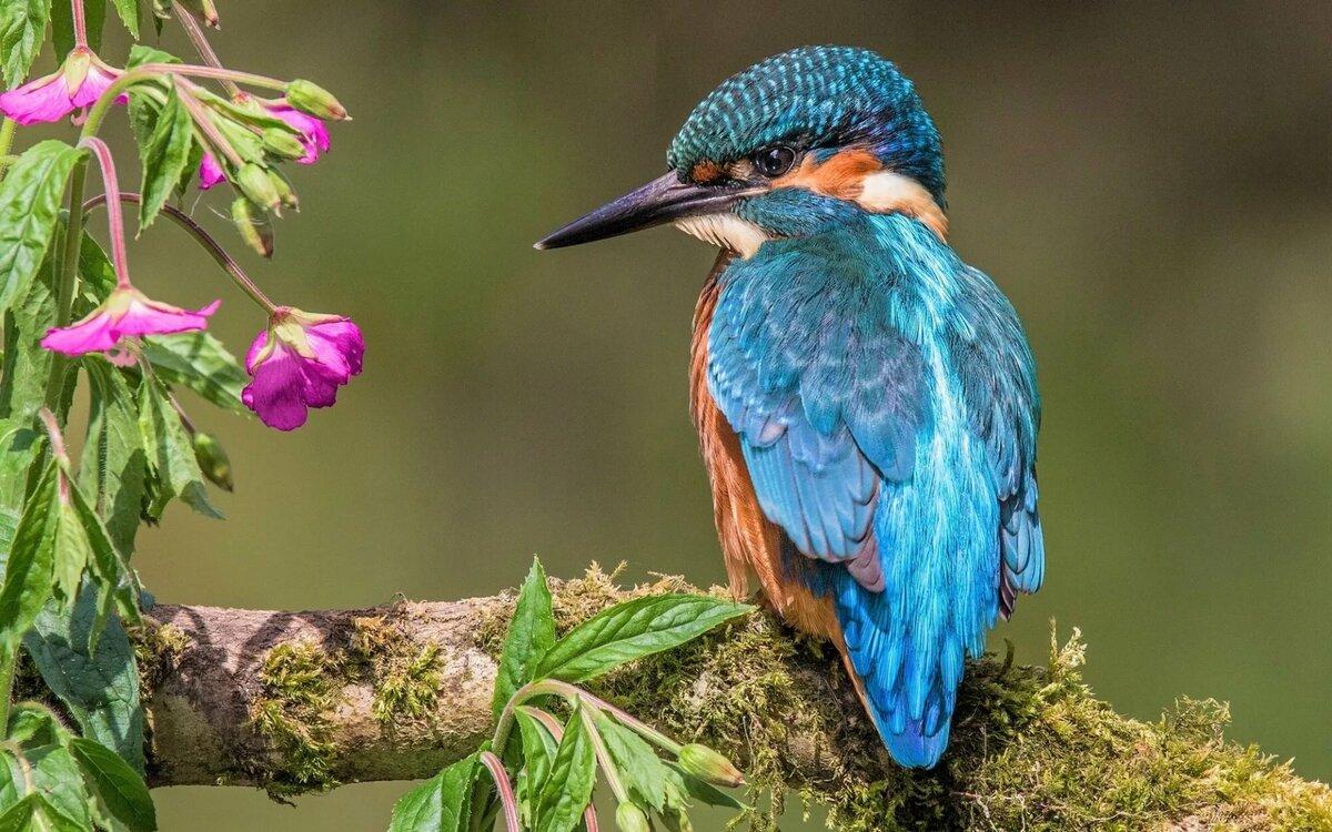 только очень красивые птицы снились цукаты винограда простой