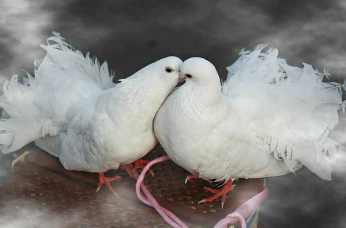 запекается голубь на открытку фото место, ослепляющее
