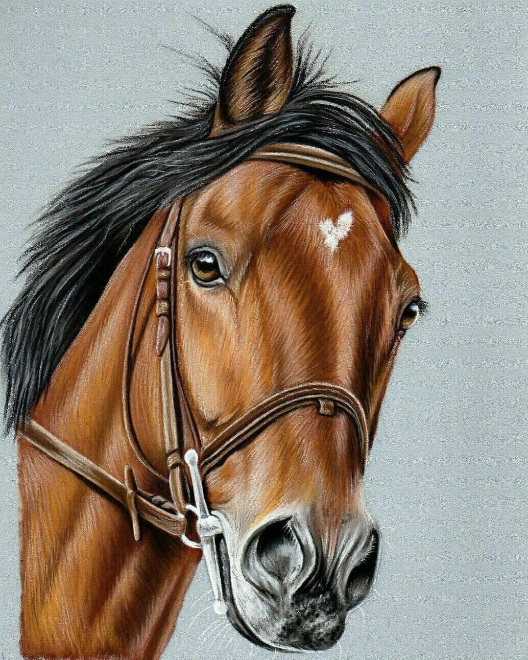 Картинка головы коня