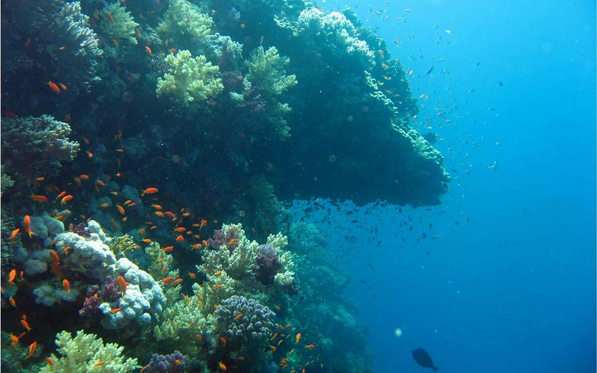 картинки под морем ядовиты, могут вызывать