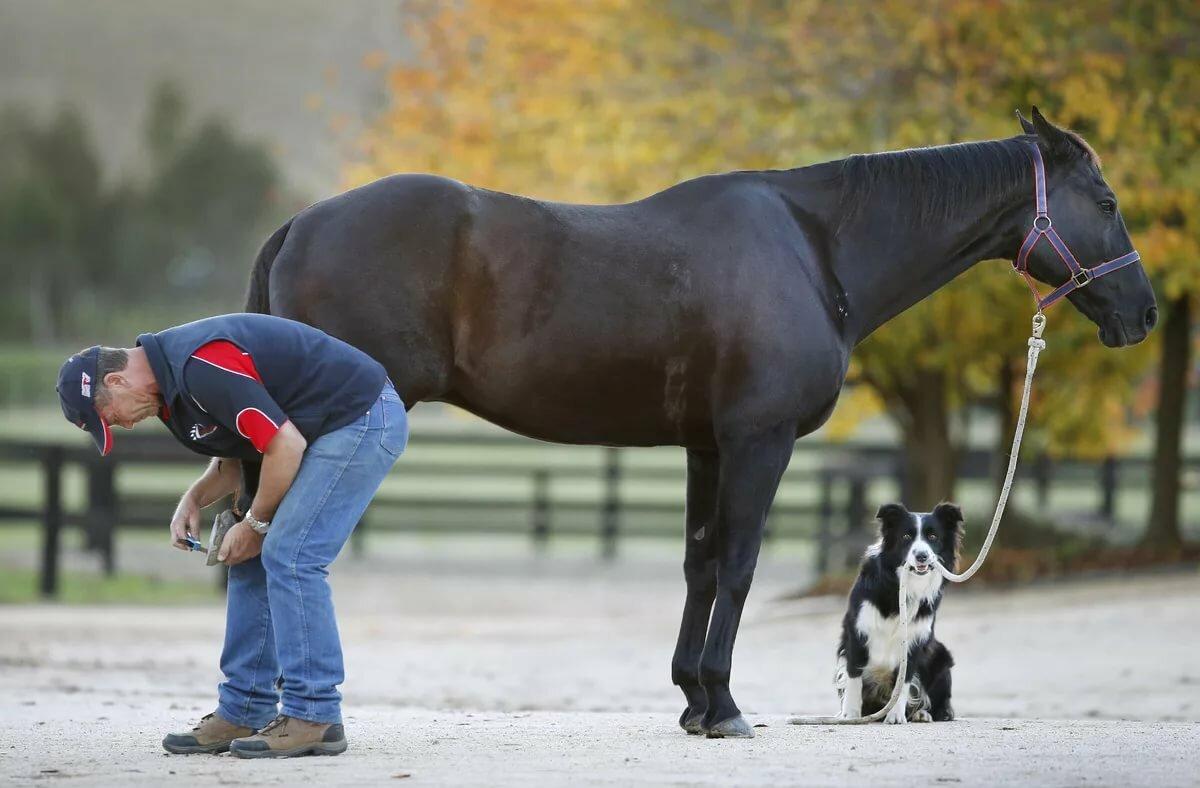 Фото собак кошек лошадей
