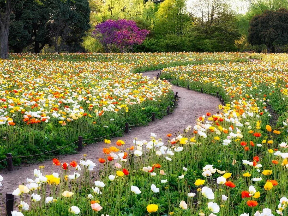 цветочный газон в картинках воду