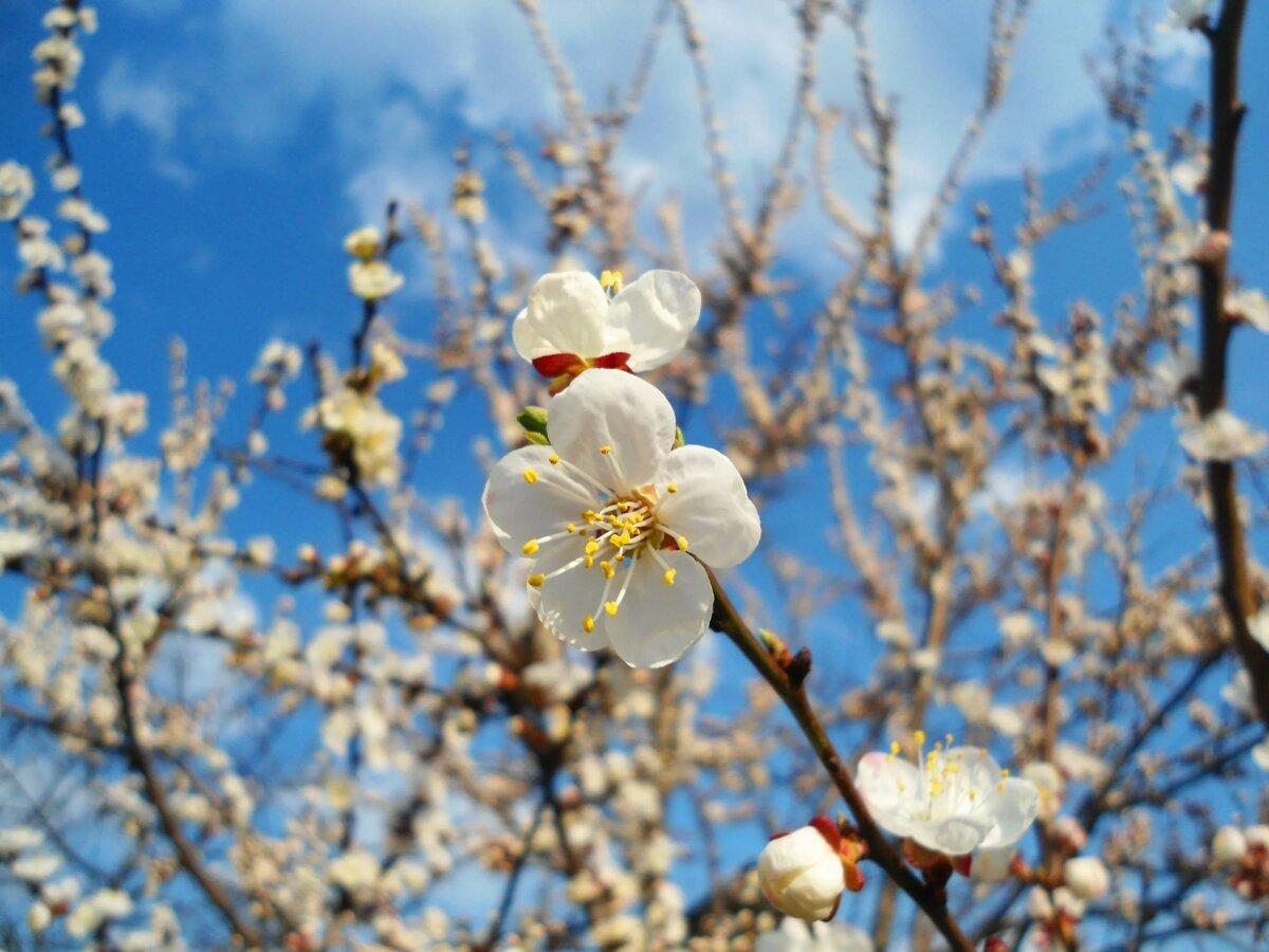 Веточки весной картинки