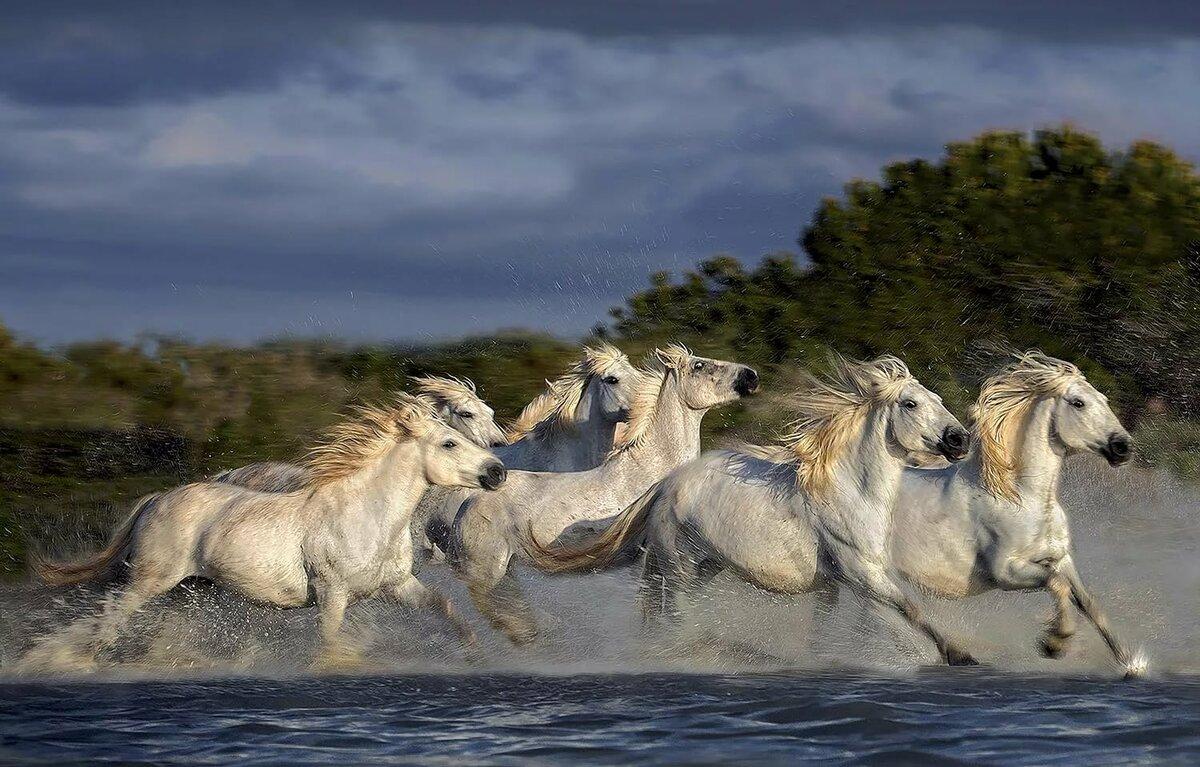 сто картинок лошадей загородных домах, как