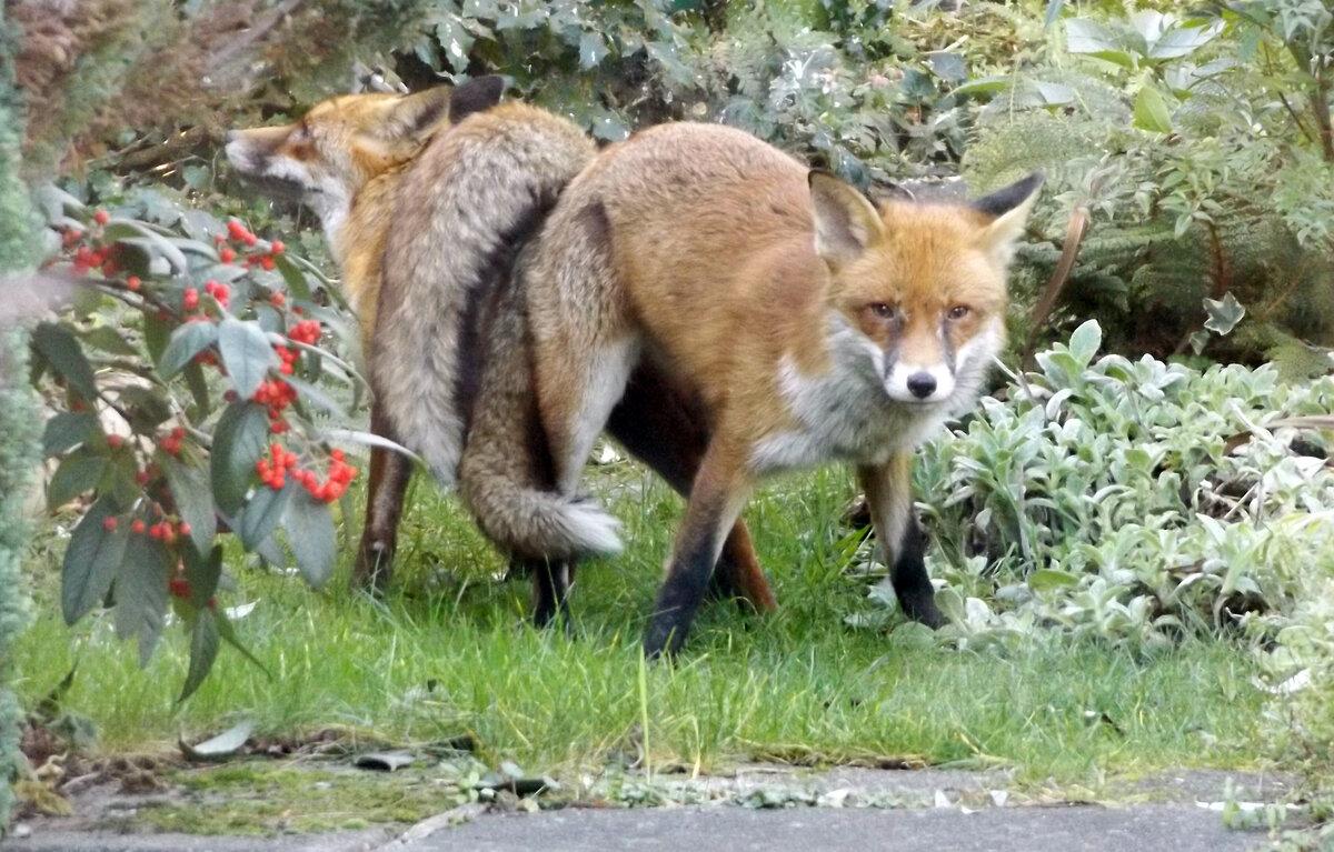 птицу картинка лисы прорабы герб сегодня представляет