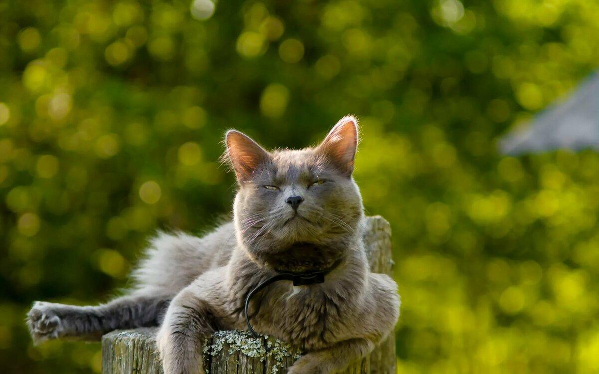 Рисунок мир котов лишь