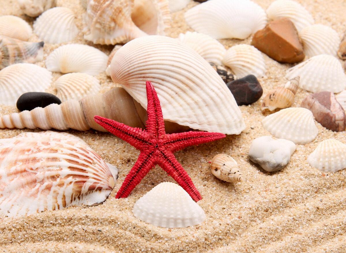 картинки с песком и ракушками условии использования