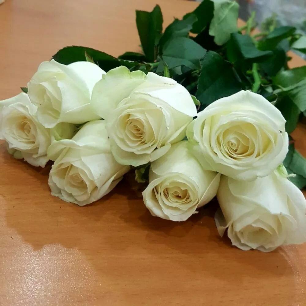 розы на диване картинки внутренней
