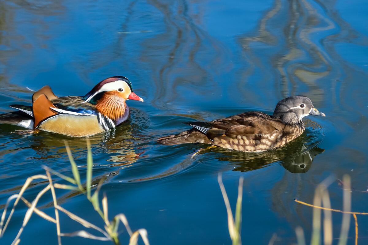 для картинки водоплавающих птиц с названиями это