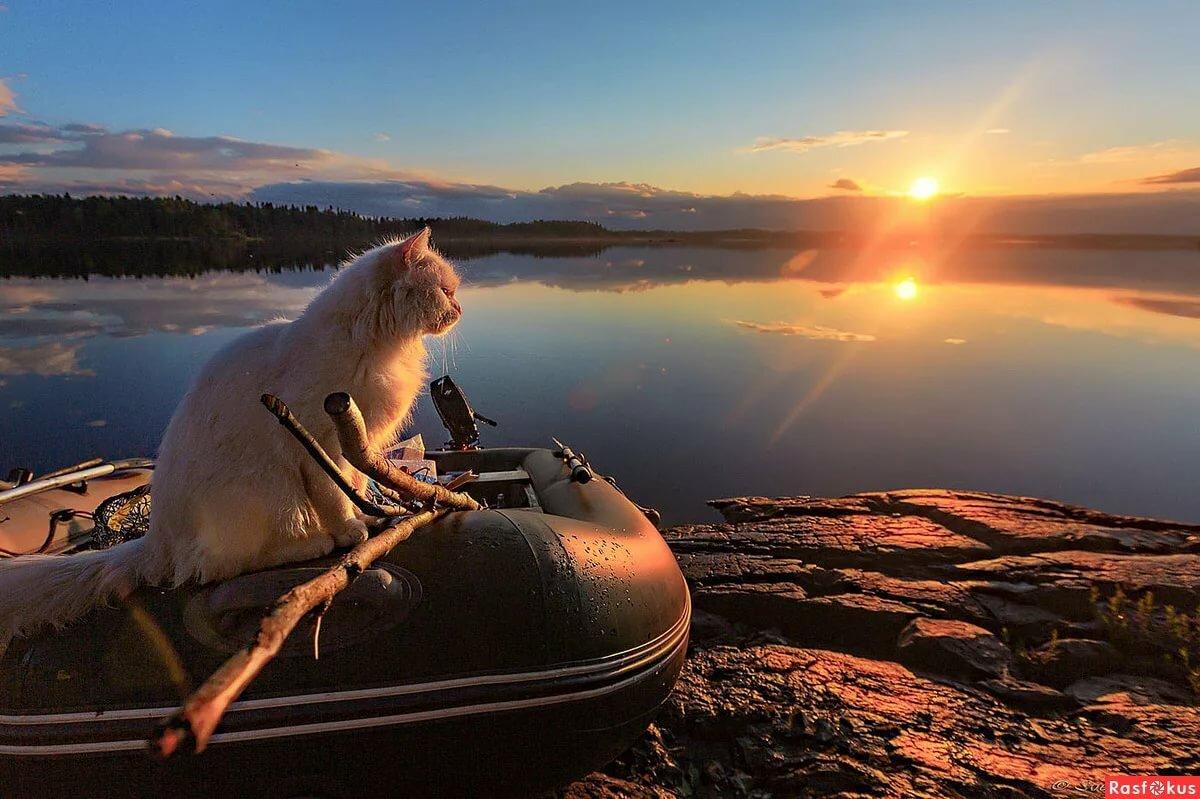 Фото с рыбой суеверия вкуса кисель