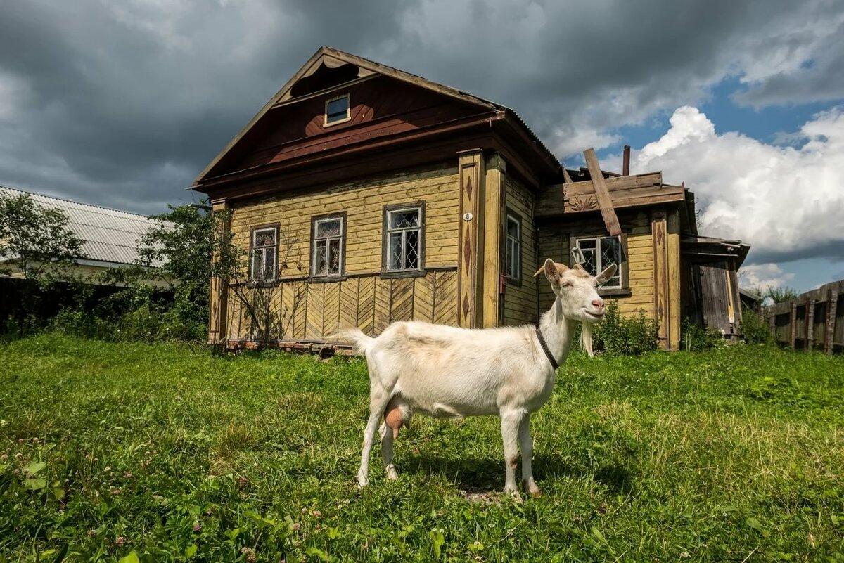 Картинки фото российской деревня