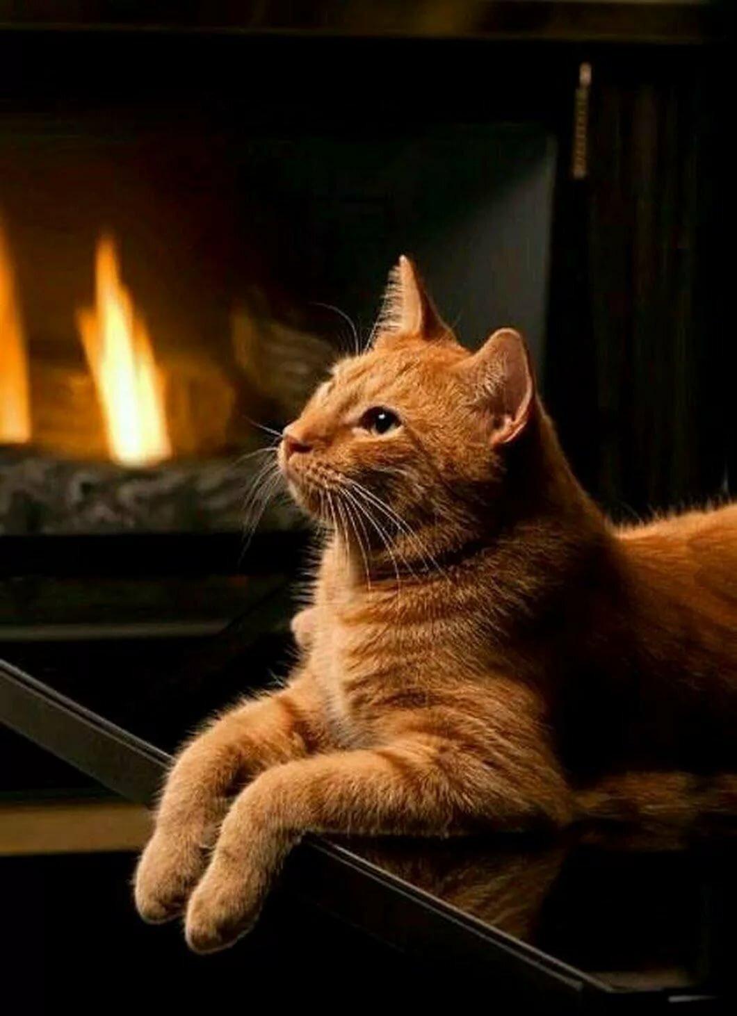представляет хорошего вечера кошки картинки услуги стилиста