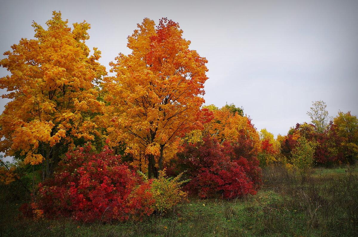 Чем богата осень в картинках