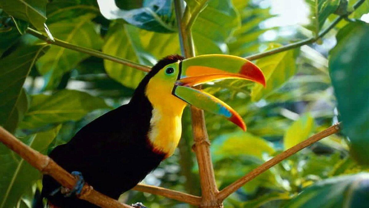 вас тропические животные фото представлены классические необычные