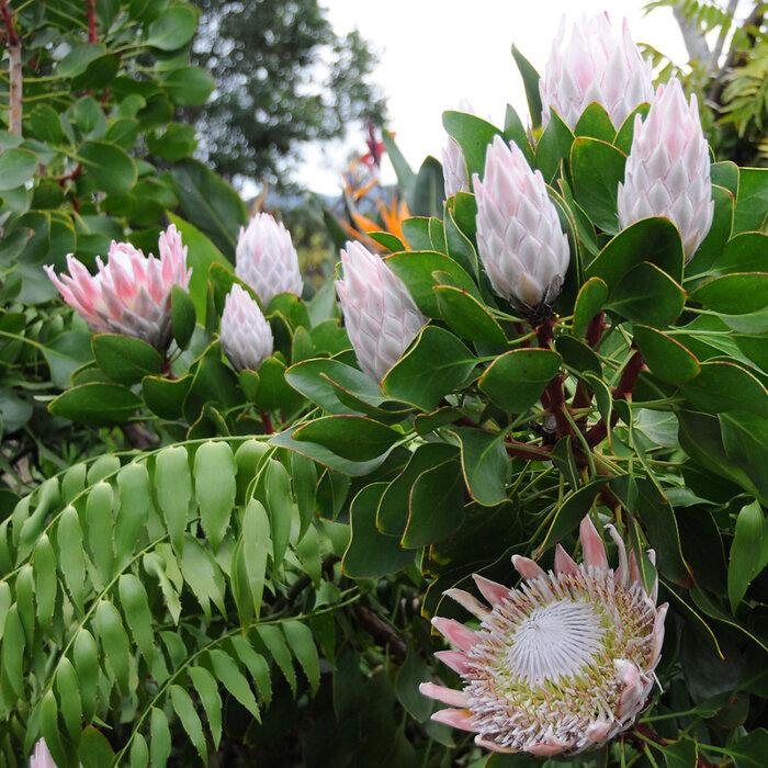 экзотические цветы фото с названиями для букетов про все отели
