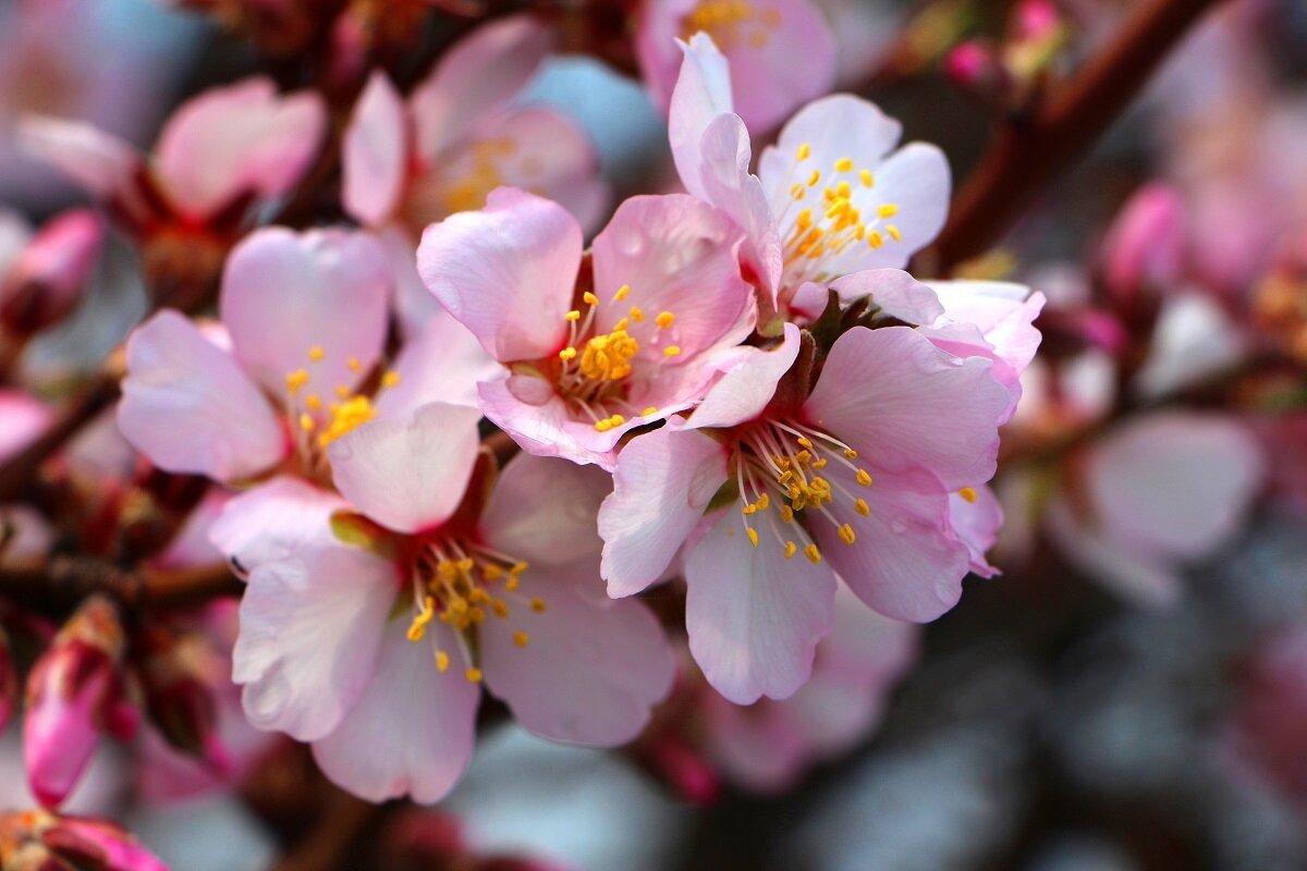 Цветы картинка время цветения