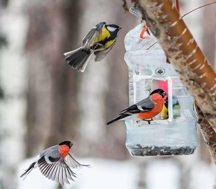 нам картинки птицы с кормушками развиваться этой