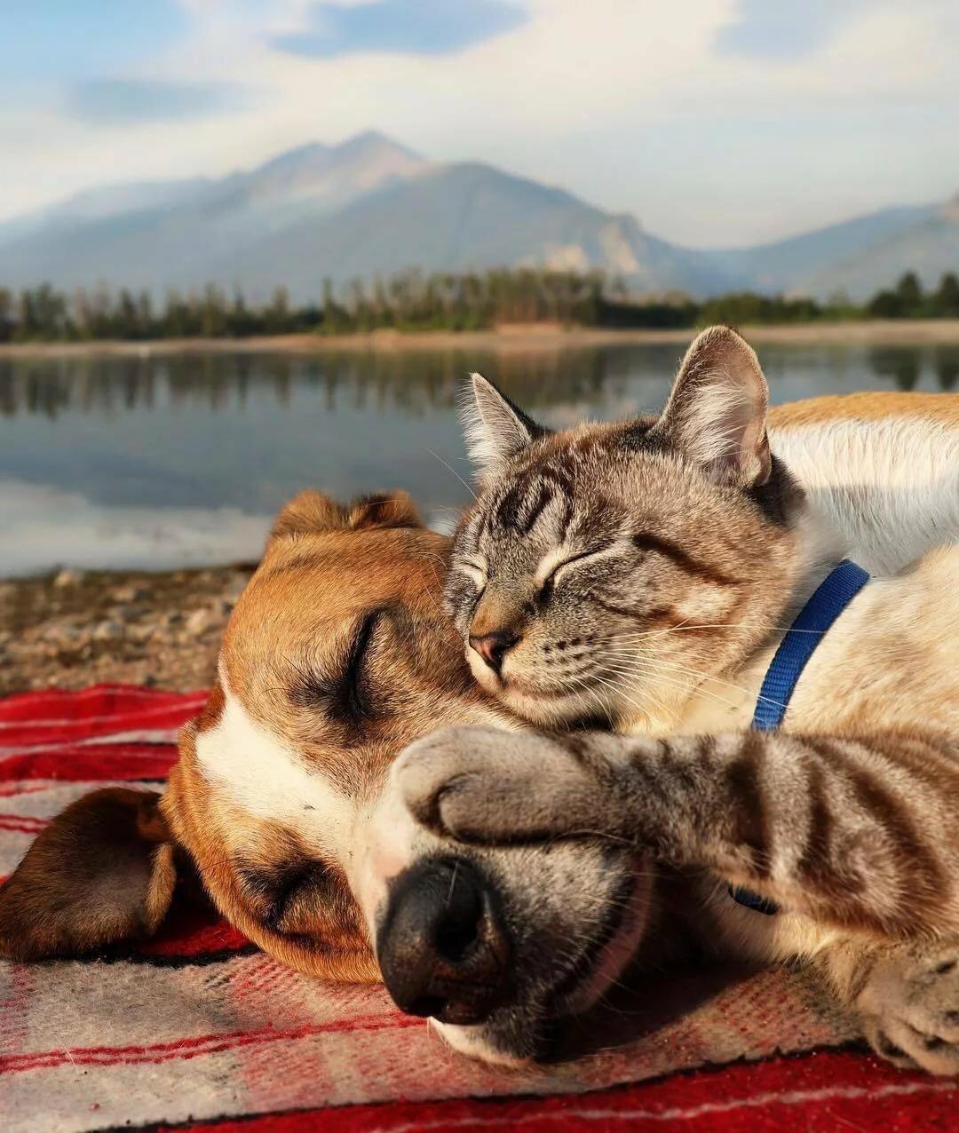 Картинки смешные о дружбе