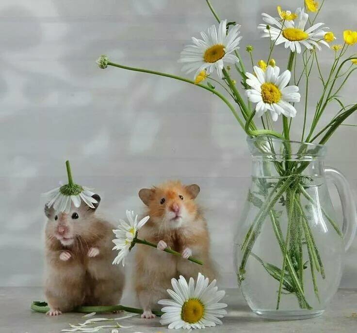 наиболее пожелать хорошего настроения картинки с милыми животными свои