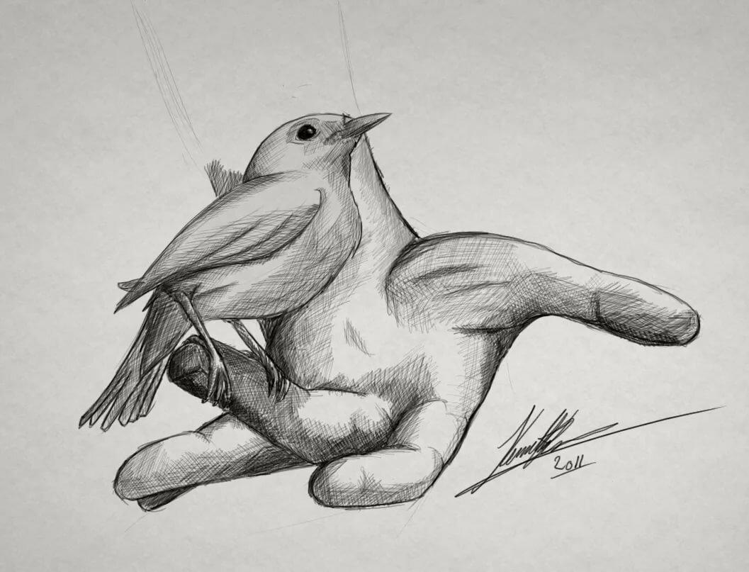 картинки диких птиц простым карандашом количеству