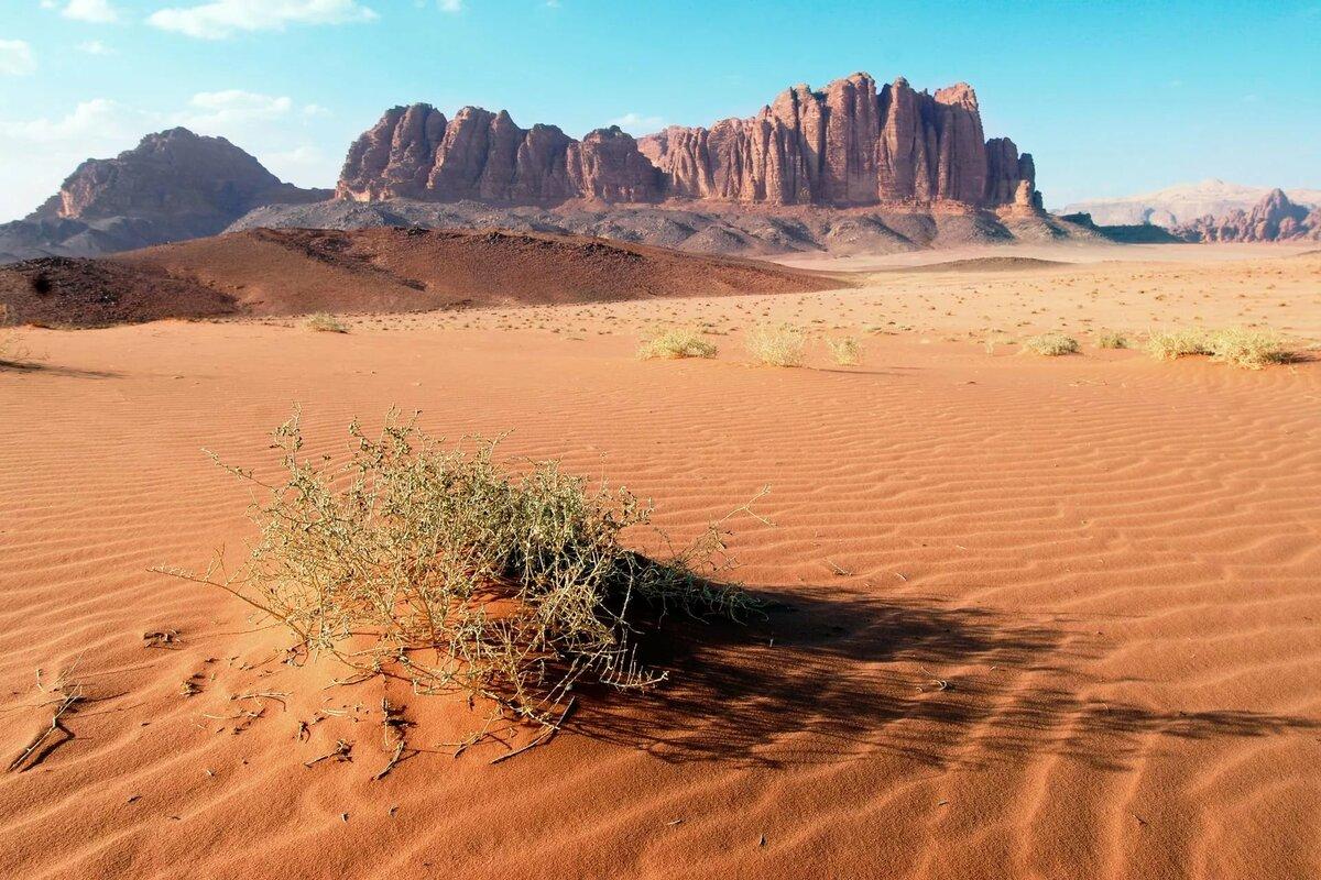 Животные пустыни раскраска