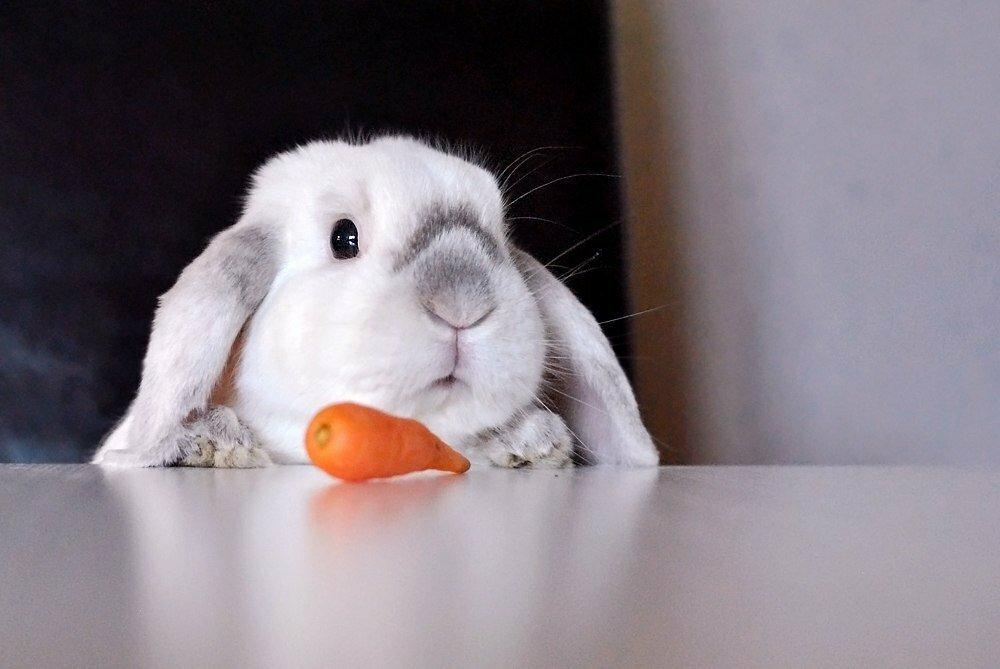 зайцы кролики прикольные картинки согласно научной интерпретации