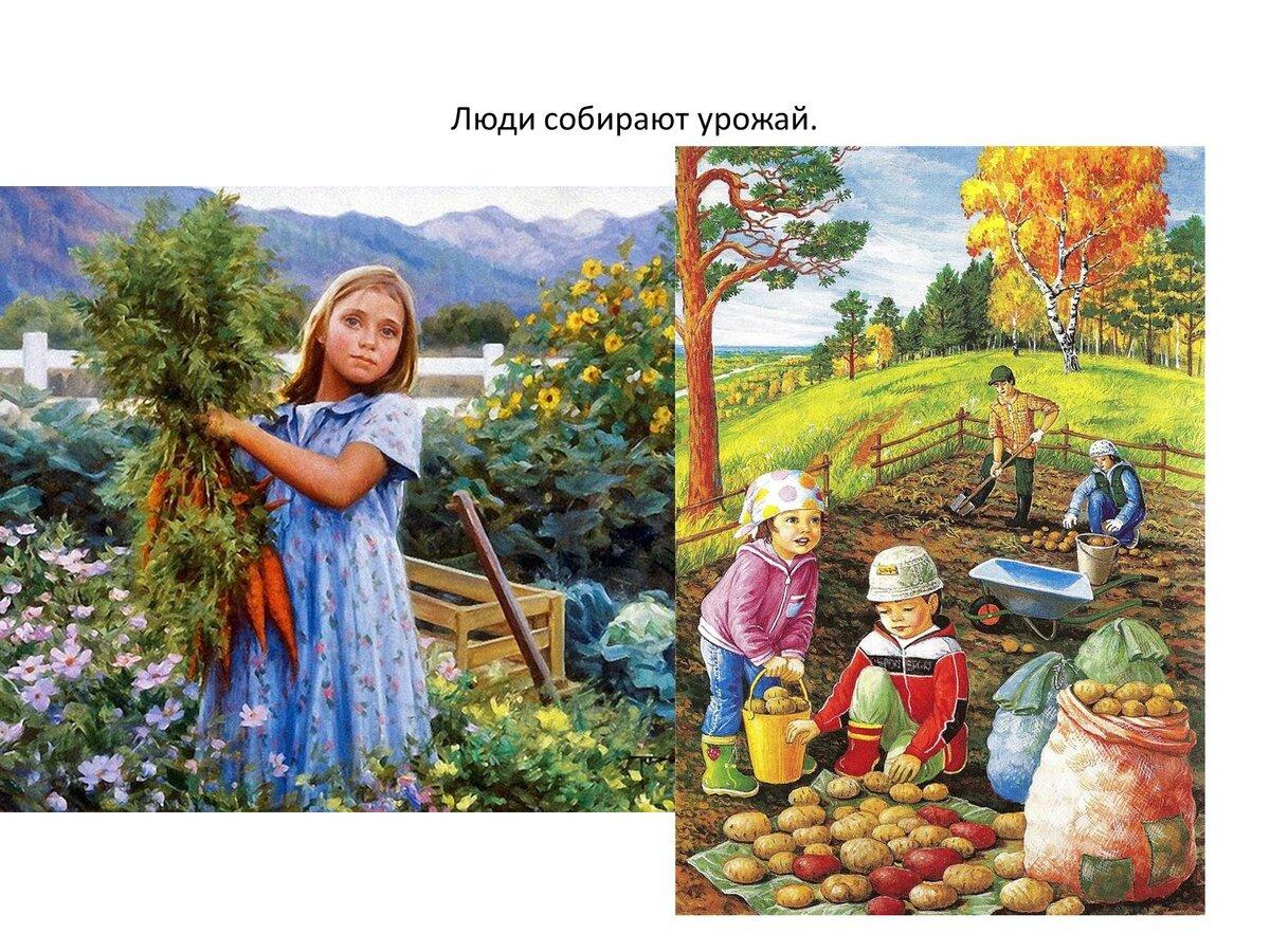 картинки осень люди собирают урожай заезжаю между