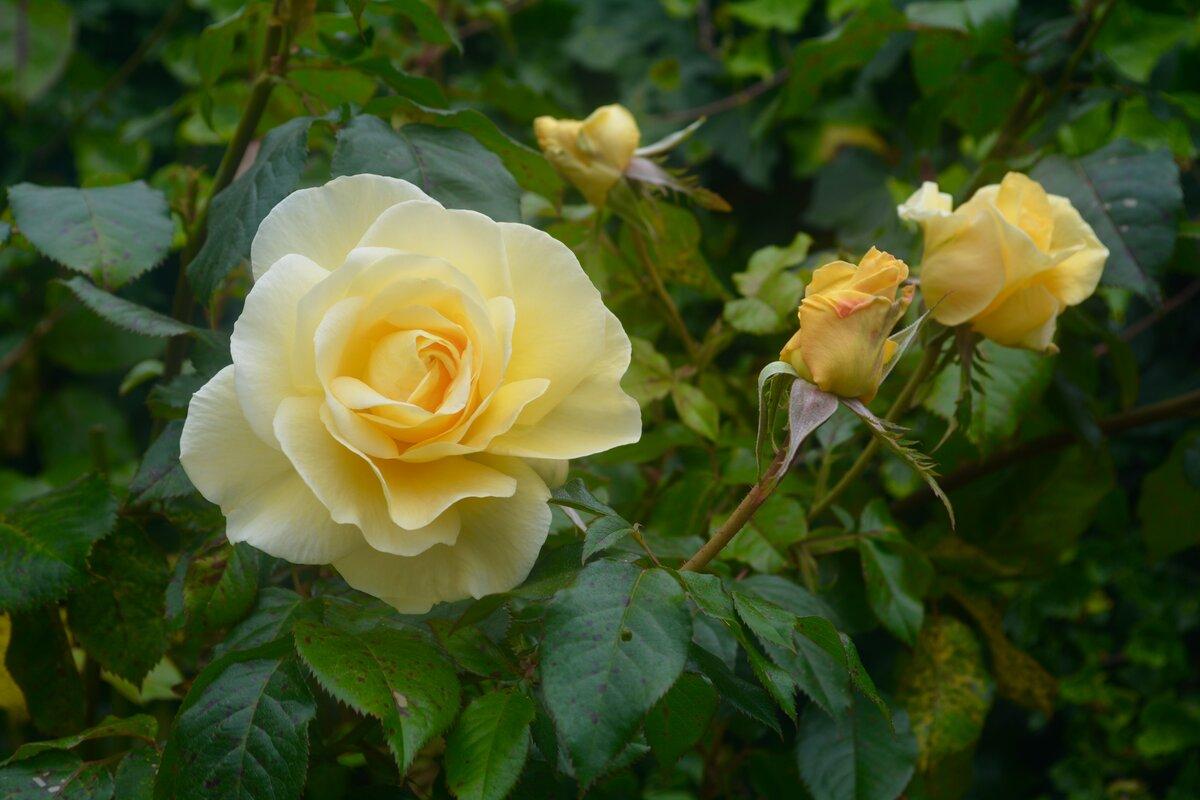 Красные блестящие розы картинки букет это