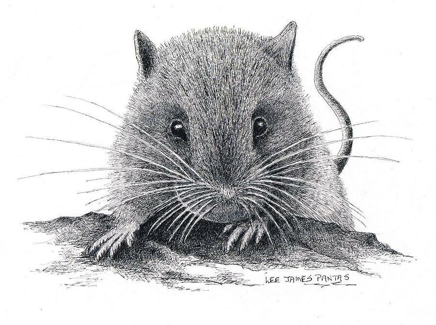 Графическая картинка мыши