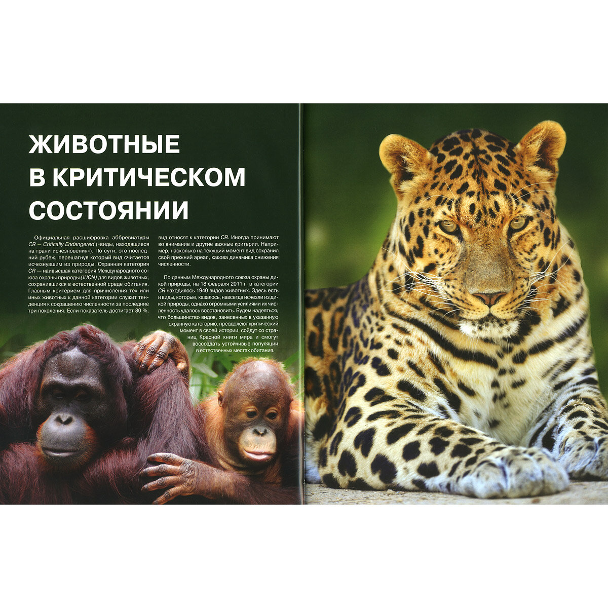 Книги с картинками о редких животных