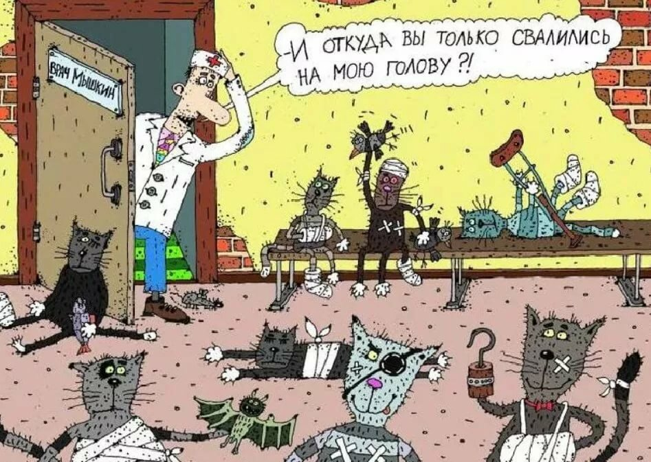 Ветеринар смешные картинки