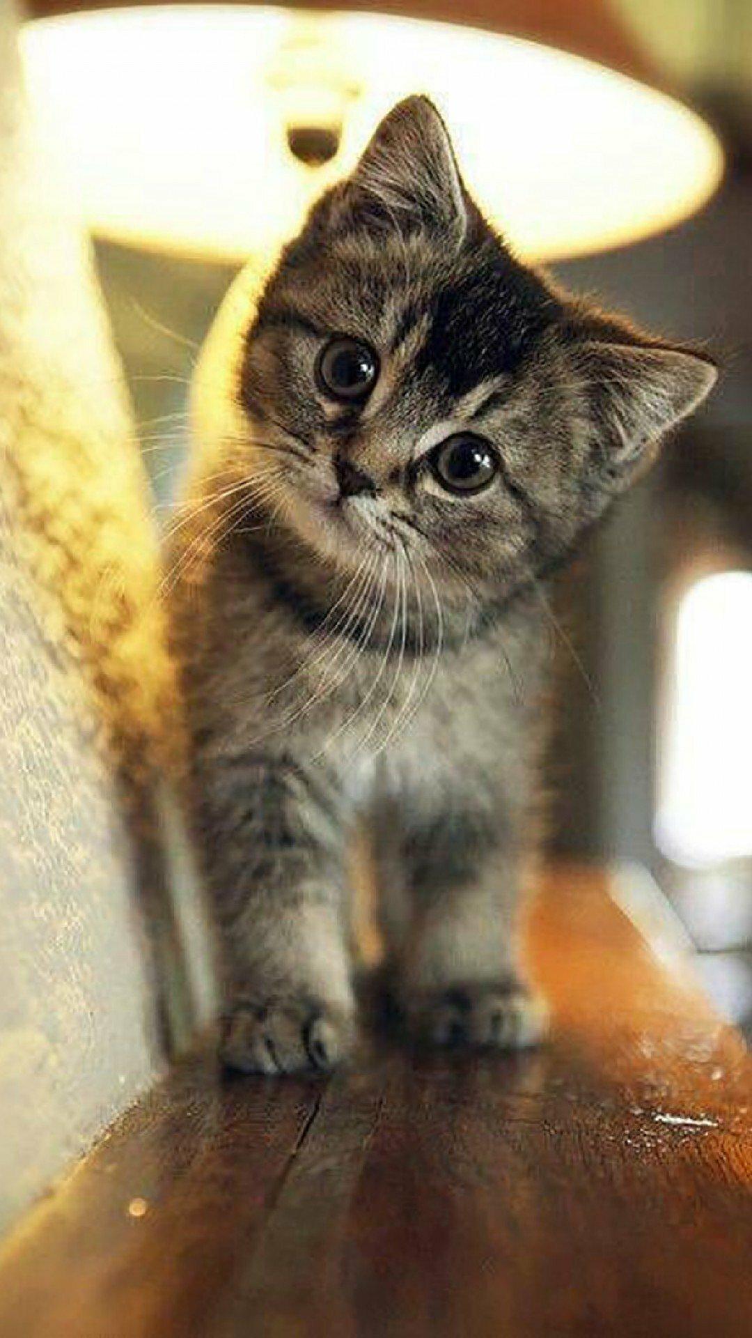 Милые картинки на аву кошки
