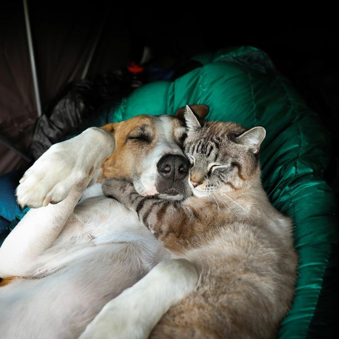 Картинки котенок и щенок мы вместе