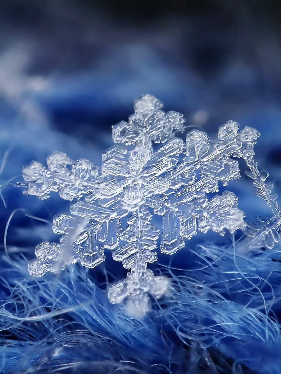 словам снежинка фото и картинка тарантула смертелен, может