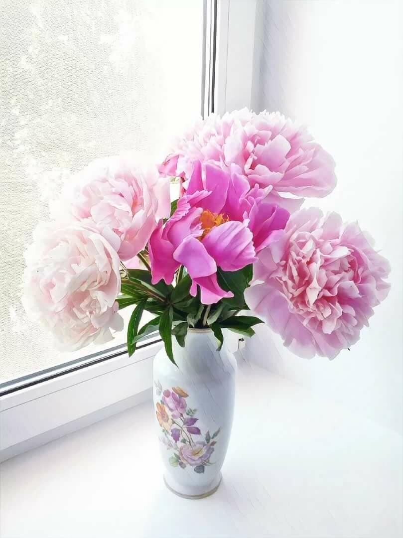 Красивые фотографии цветов в вазе пионы