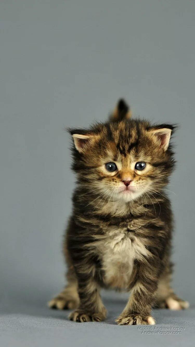 Картинки котята обои для рабочего стола например