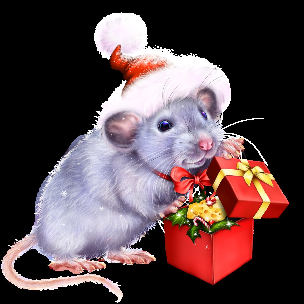 пространства, красивые картинки с крысами к новому году холле