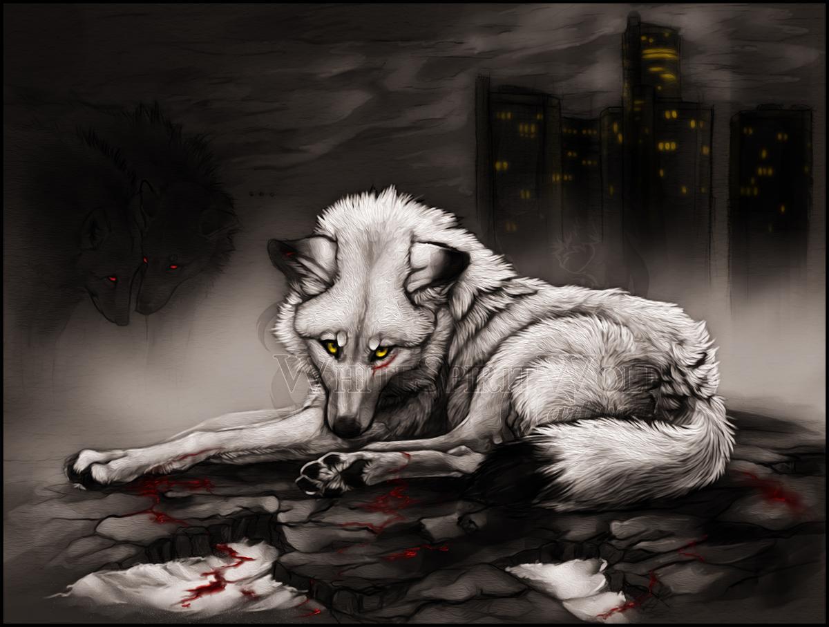 Раненый белый волк картинки