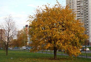 осень в люберцах