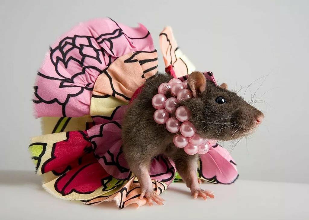 смешные картинки с мышками решились