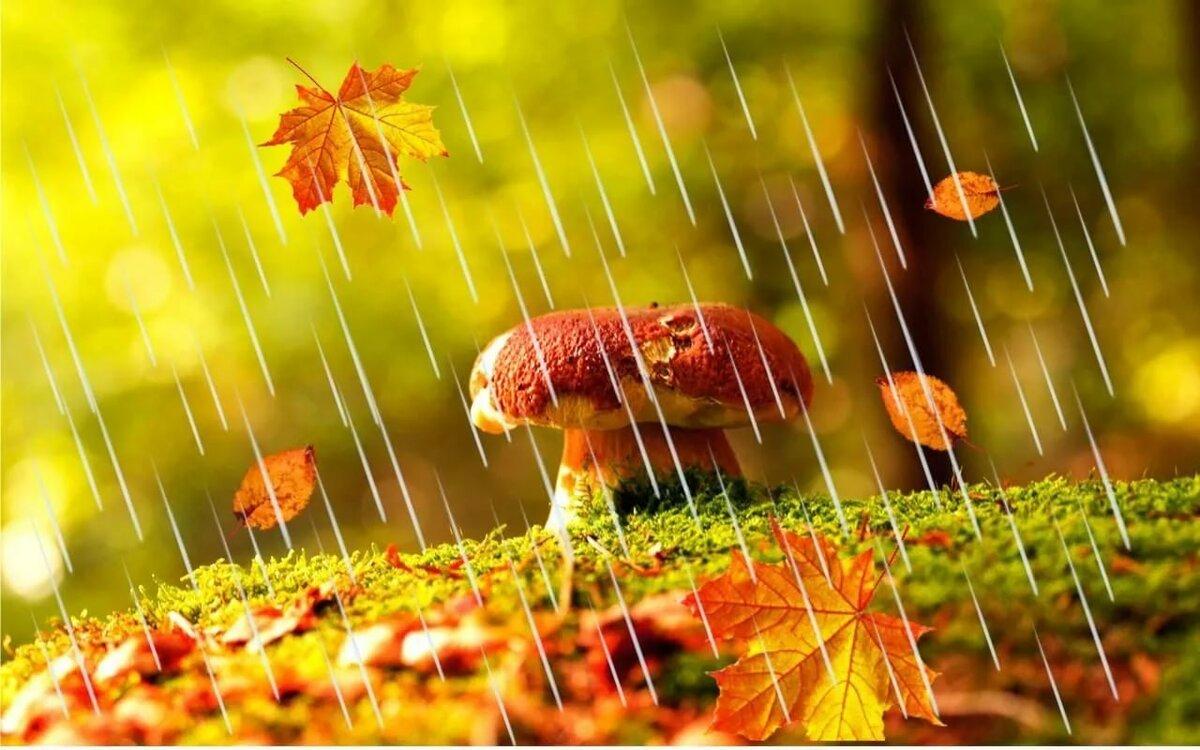 Картинка дождливой осени для детей