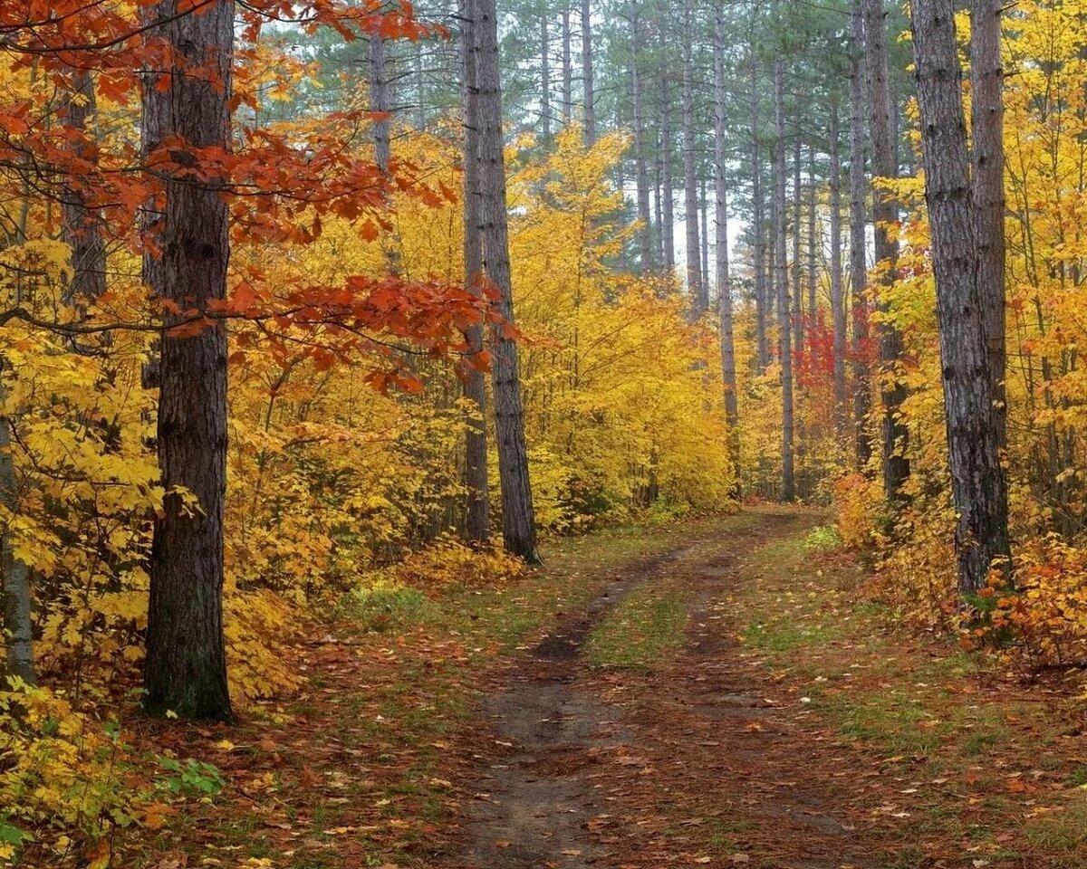 красота осеннего леса фото печатающая головка