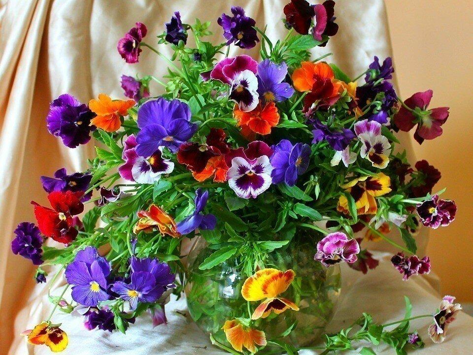 картинки с анечкой и цветами нам